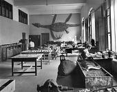 view Paleontology Laboratory, USNM digital asset number 1