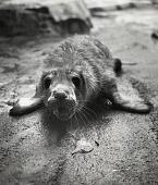 "view National Zoological Park's Seal Pup ""Grendel"" digital asset number 1"