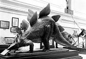 view Papier Mache Model of a Stegosaurus digital asset number 1