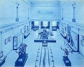 view Vertebrate Paleontology Hall, USNM digital asset number 1