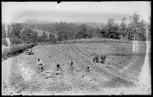 view Digging Potatoes digital asset: Positive image from a glass plate negative by Walter J. Hussey, Digging potatoes