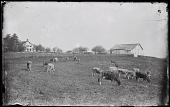 view Hussey Farm digital asset: Positive image from a glass plate negative by Walter J. Hussey, Hussey farm