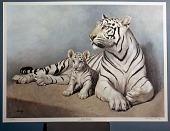 "view White Tiger ""Mohini Rewa"" and Cub digital asset number 1"