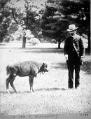 view Hornaday with Baby Bison at Smithsonian digital asset number 1
