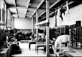 view Work & Storage Area in the Natural History Building digital asset number 1