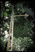 view Brian C. Bock Along Pipeline Road, Panama, STRI digital asset number 1