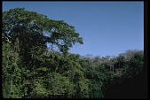 view Jungle Forestation on Barro Colorado Island (BCI), Panama, STRI digital asset number 1