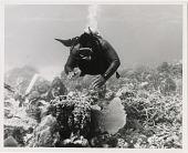 view John Kinard Dives in British Honduras digital asset number 1