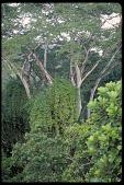view Jungle, Panama, STRI digital asset number 1