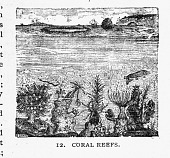 view Engraving of Coral Reefs digital asset number 1