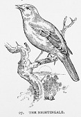 view Engraving of a Nightingale digital asset number 1