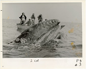 view Smithsonian Associates Whale Watching Trip digital asset number 1