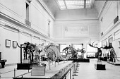 view The Vertebrate Paleontology Exhibit in the East Central Hall, First Floor, in Natural History Building digital asset number 1