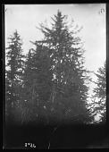 view Kwakiutl Tree Burial at Fort Rupert digital asset number 1