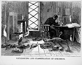 view Ornithologist at Work with Specimens digital asset number 1