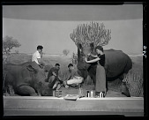 view Preparation of Rhinoceros Diorama digital asset number 1