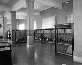 view Bird Hall, National Museum of Natural History, pre-1956 digital asset number 1