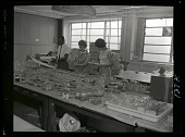view Smithsonian Oceanographic Sorting Center (SOSC) Staff and Laboratory at Navy Yard digital asset number 1