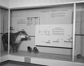 view Mammals Versus Climate Exhibit, Hall of Mammals, National Museum of Natural History digital asset number 1