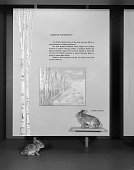 view Habitat Preference Exhibit, Hall of Mammals, National Museum of Natural History digital asset number 1