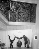 view Monkey Exhibit, Hall of Mammals, National Museum of Natural History digital asset number 1