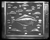 view Department of Fishes Exhibit digital asset number 1