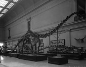 view Extinct Monsters Hall in Natural History Museum, late 1930s digital asset number 1