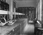 view Department of Mammals Storage, National Museum of Natural History, 1911 digital asset number 1