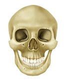 view Written in Bone: Bone Basics digital asset number 1