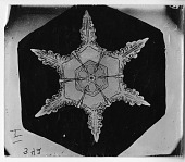 view Bentley Snowflake 342, c. 1890 digital asset number 1