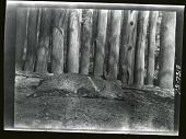 view Sleeping Animal at Zoo c. 1905 digital asset number 1