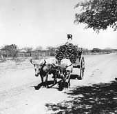 view Oxcart Near Monagrillo, Panama digital asset number 1