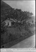 view Mr. Dobbie's Garden in Ecuador, 1923-1924 digital asset number 1