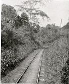 view Tropical Jungle, Panama digital asset number 1