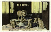 view Postcard of Roosevelt Lion Group digital asset number 1