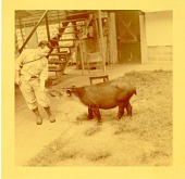 view Watson M. Perrygo and His Devoted Companion - A Baird's Tapir digital asset number 1