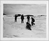 view Operation Windmill Expedition Members Photographing a Seal digital asset number 1