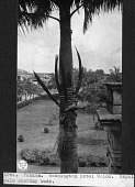 view A Royal Palm digital asset number 1