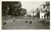 view President Wilson's Sheep at White House digital asset number 1