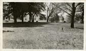 view President Wilson's Sheep at the White House digital asset number 1