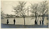view Cherry Blossoms around the Tidal Basin, with the Washington Monument in the background digital asset number 1