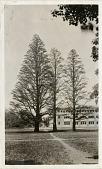 view Trees in Washington, DC digital asset number 1