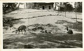 view Views of the National Zoological Park in Washington, DC, showing Deer digital asset number 1