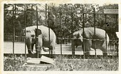 view Views of the National Zoological Park in Washington, DC, showing Elephants digital asset number 1