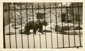 view Views of the National Zoological Park in Washington, DC, showing Brown Bear digital asset number 1
