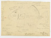 view Sketch of Balistoid, with notes digital asset number 1