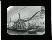 view Complete Installation of the Diplodocus Longus in National Museum digital asset number 1