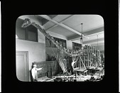 view Designing Iron Framework in Paleontologic Laboratory to Support Diplodocus Skeleton digital asset number 1