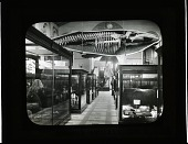 view Mammals Exhibits in South Hall of the U.S. National Museum digital asset number 1