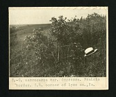 view [48b] 3. -Q macrocarpa var. depressa. Prairie border. S.W. corner of Lyon county, Iowa digital asset number 1